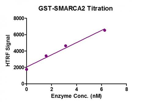 SMARCA2 / BRM (1367-1511) HTRF activity assay