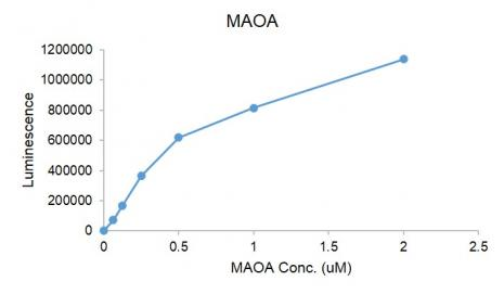 MAOA protein activity assay