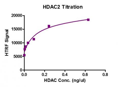 HDAC2 protein activity assay