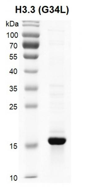 Recombinant Histone H3.3 (G34L) gel.