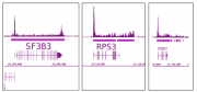 RNA pol II antibody (mAb) tested by ChIP-Seq.