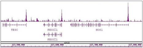 ASH2L antibody (pAb) tested by ChIP-Seq.