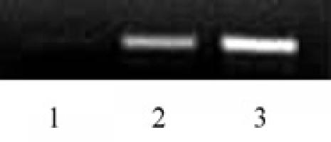 Histone H2BK46ac antibody (pAb) tested by ChIP.