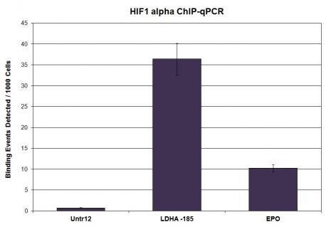 HIF-1 alpha antibody (pAb) tested by ChIP.