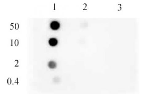 Histone H3K9me1 antibody (mAb) tested by dot blot analysis.