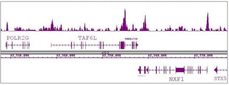 Oct-4 antibody (pAb) tested by ChIP-Seq.
