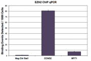 EZH2 antibody (pAb) tested by ChIP.