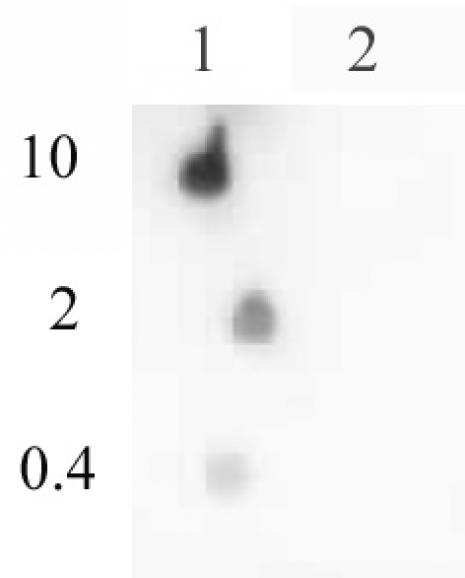 Histone H4ac (pan-acetyl) antibody (pAb) tested by dot blot analysis.