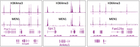 Menin antibody (pAb) tested by ChIP-Seq.