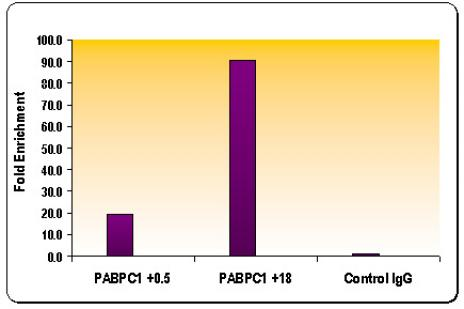 Histone H3K36me3 antibody (pAb) tested by ChIP.