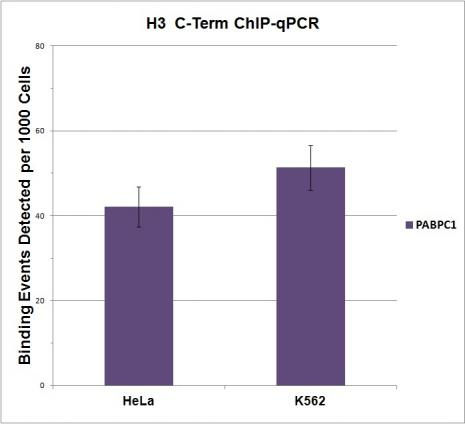 Histone H3, C-terminal antibody (pAb) tested by ChIP.
