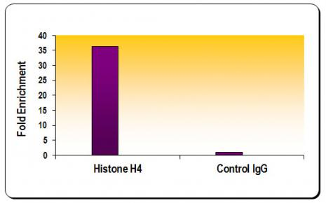 Histone H4 antibody (pAb) tested by ChIP.
