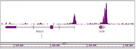 Histone H3K4me3 antibody (mAb) tested by ChIP-Seq.