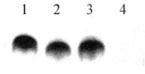 Histone H4K8K12K16 (pan-biotinylated) antibody (pAb) tested by dot blot analysis.