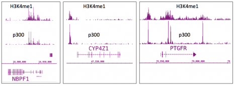 p300 antibody (mAb) tested by ChIP-Seq.