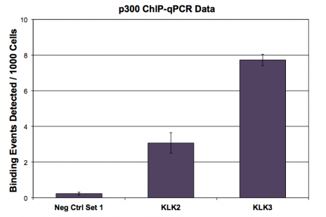 p300 antibody (mAb) tested by ChIP.
