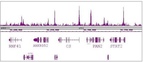 RBBP5 antibody (pAb) tested by ChIP-Seq.