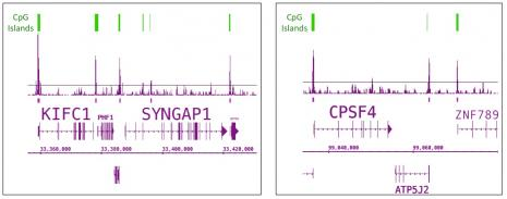 Tet1 antibody (pAb) tested by ChIP-Seq.