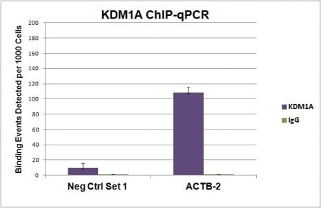KDM1A antibody (pAb) tested by ChIP.