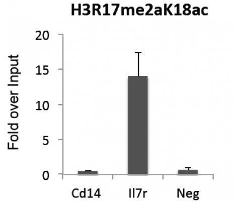 Histone H3R17me2aK18ac antibody (pAb) tested by ChIP.