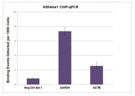 Histone H3K4me1 antibody (pAb) tested by ChIP.