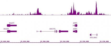 Histone H3K9ac antibody (mAb) tested by ChIP-Seq.