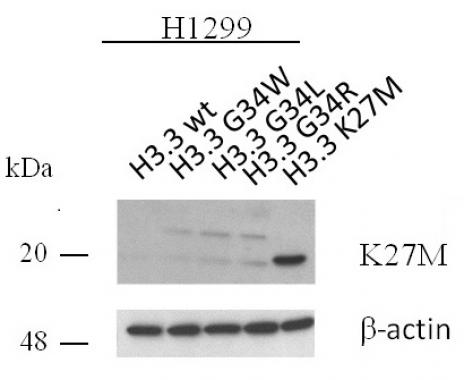 Histone H3.3K27M antibody (pAb) tested by Western blot.