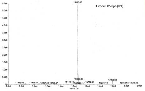 Mass Spec analysis for Recombinant Mononucleosomes H3S10ph (EPL)
