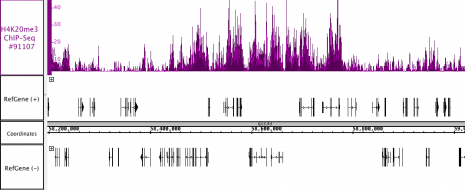 AbFlex<sup>®</sup> Histone H4K20me3 antibody (rAb) tested by ChIP-Seq.