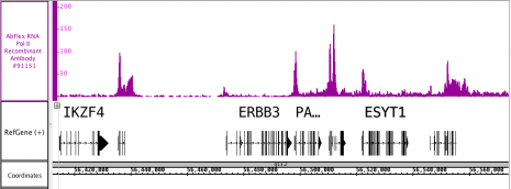 AbFlex<sup>®</sup> RNA Pol II antibody (rAb) tested by ChIP-Seq.